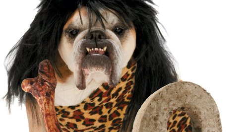 Caveman dog