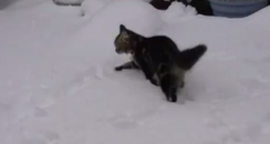 Dusty the cat in the snow