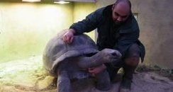 Giant Tortoise 3