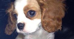 Emma's new puppy