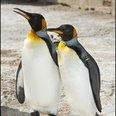 Oldest Penguin