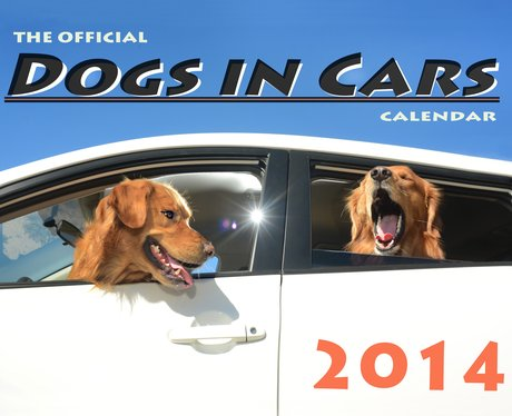 Two brown dogs in a car