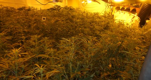 Cannabis Factory Henley Road