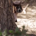 puppy dog wearing a hat