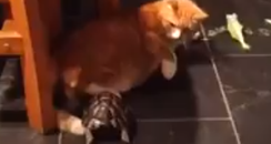 Cat and tortoise