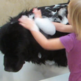 Baby washing dog in bath