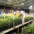 The plants seized in Gravesend