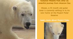 Nissan the polar bear
