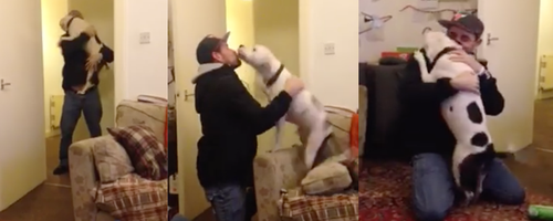 dog excited reunited with owner