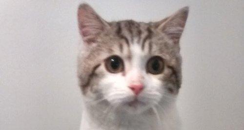 Ikea kitten