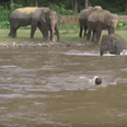 Incredible Moment Elephant RESCUES A Drowning Man