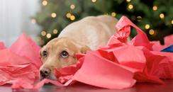 festive fail