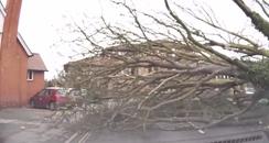 Storm Doris tree