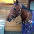 Horses At Polling Stations
